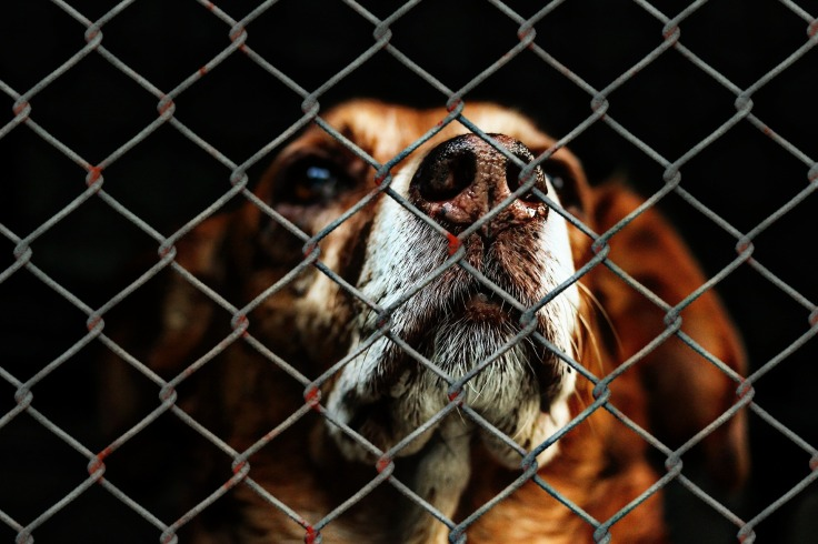 animal-welfare-1116203_1920.jpg