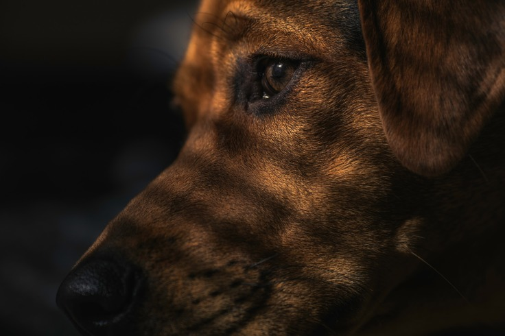dog-1149188_1920.jpg