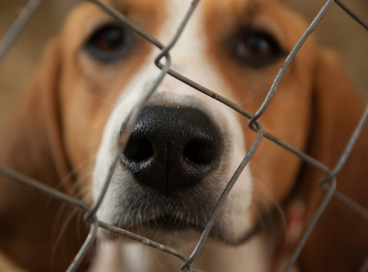 dog-1437540_1920.jpg